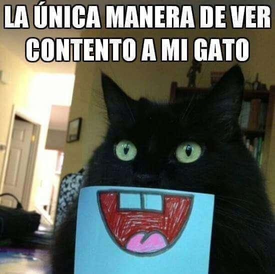 La unica forma de ver a tu gato feliz