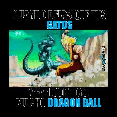 Cuando ves Dragon Ball con tus gatos
