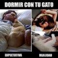 Dormir con un gato