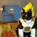 El gato mas poderoso del mundo