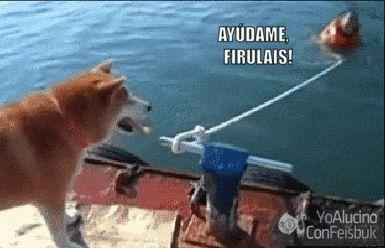 El perrito que odiaba a los humanos