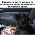 Tu perro en la comida china