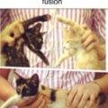 Cuando tus gatos aprenden la fusion