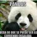 Los pandas son una clara evidencia
