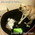 Tu perro tambien puede ser malvado