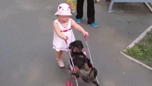 Una forma diferente de pasear al perro