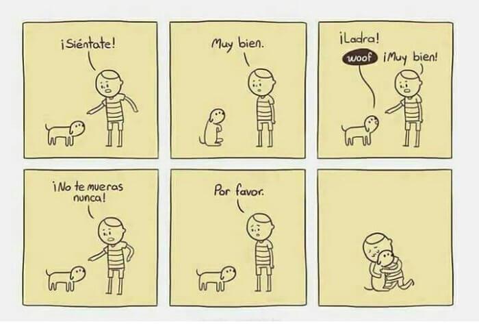 las instrucciones que debe aprender tu perro
