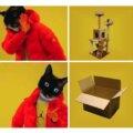 Cosas que prefieren los gatos