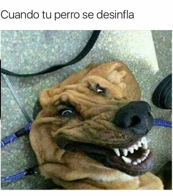 Cuando se desinfla el perro