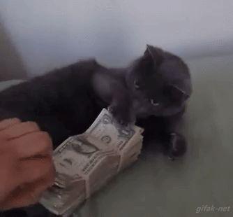 El gato que ama el dinero