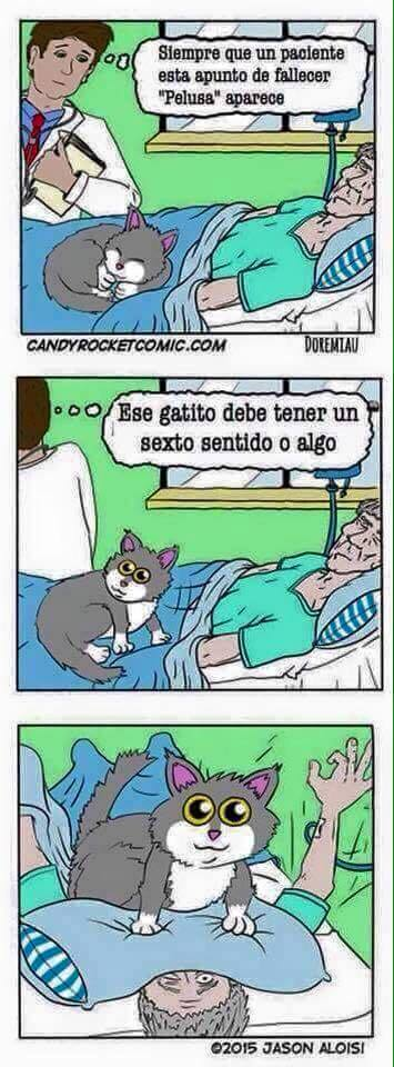 El gato que tiene un sexto sentido