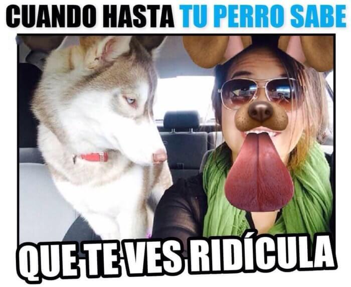 Hasta tu perro se da cuenta