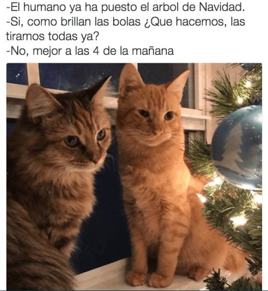 Los planes navideños de tus gatos