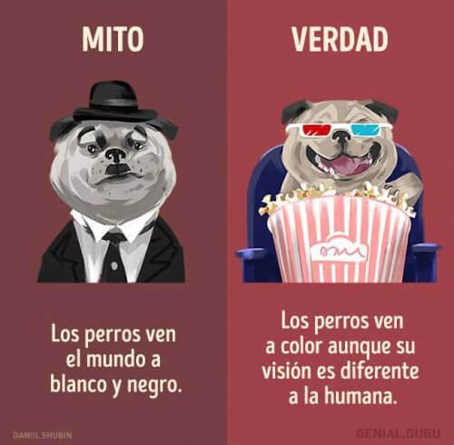 Mito vs verdad de los perros