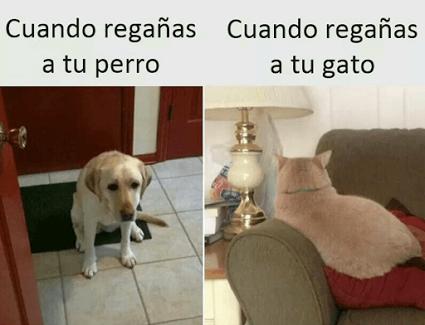 Regaños al perro vs el gato