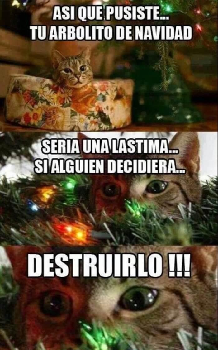 Tu gato en navidad
