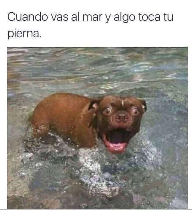 Cuando algo toca tu pierna en el mar