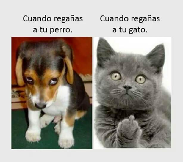 Cuando regañas al perro vs el gato