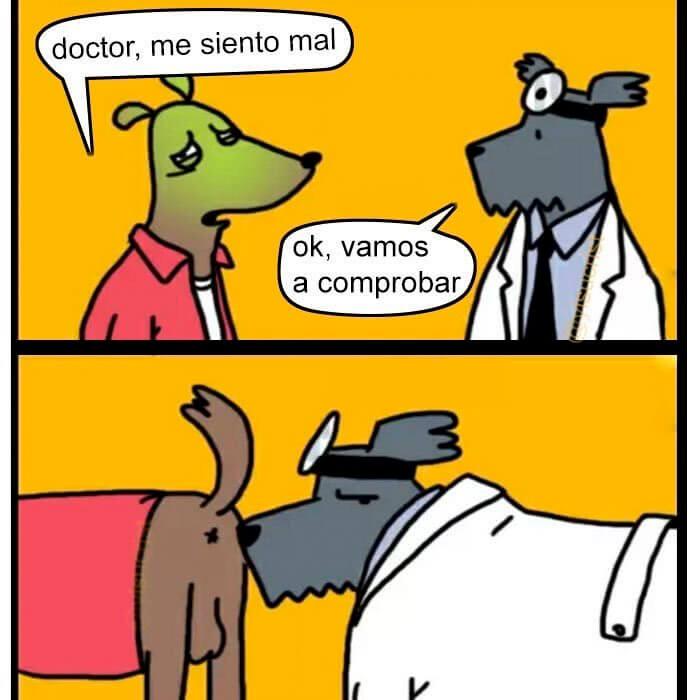 Doctores de perros