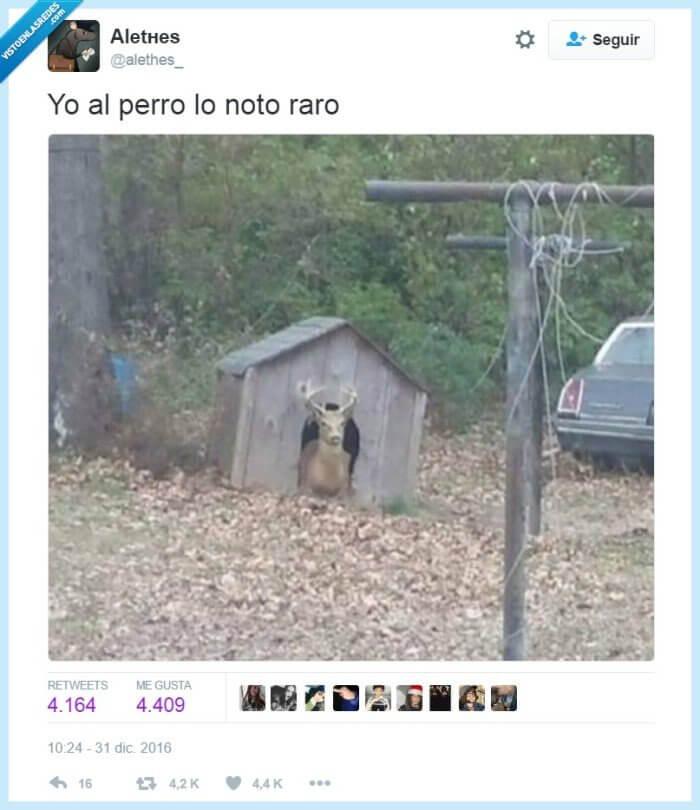 El perro esta un poco raro