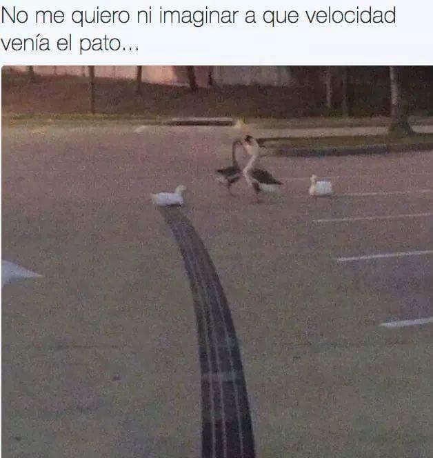 La velocidad del pato