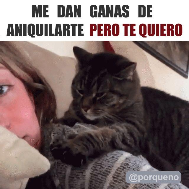 Las cosas que piensa tu gato