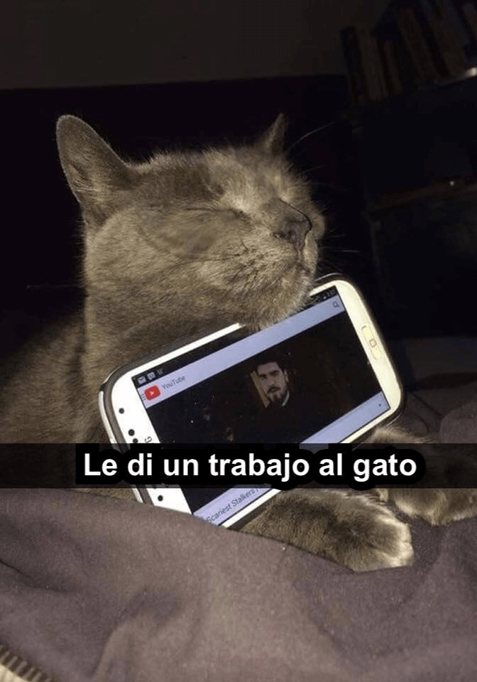 Un trabajo para el gato