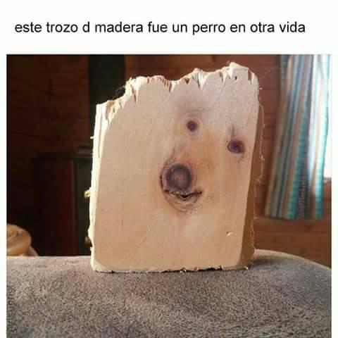 El fue un perro en otra vida