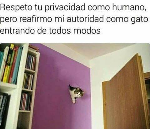 La autoridad de los gatos
