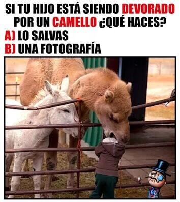 Que haces si tu hijo es devorado por un camello