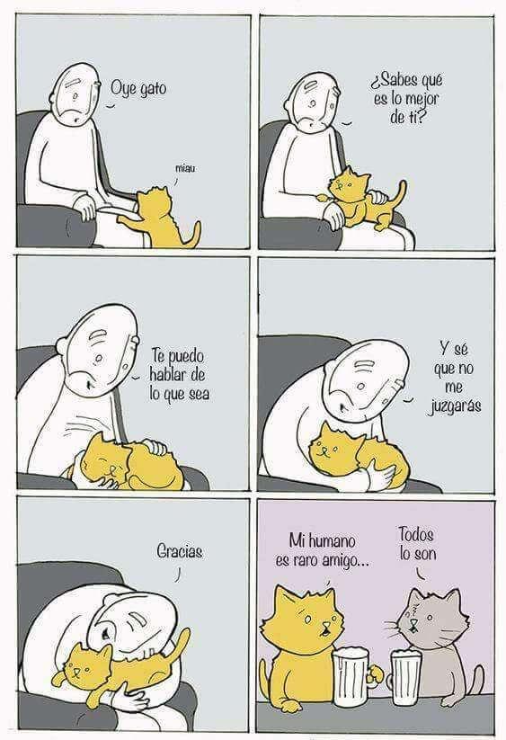 Somos extraños para los gatos