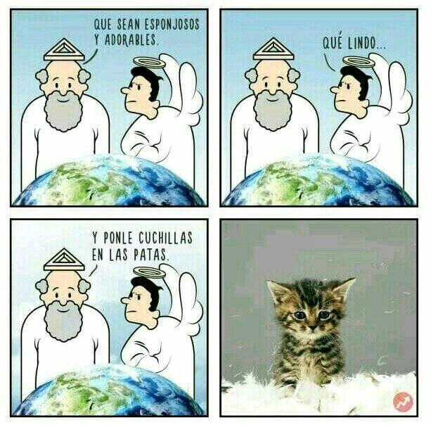 El origen de los gatos