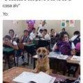 Educas al perro o se va