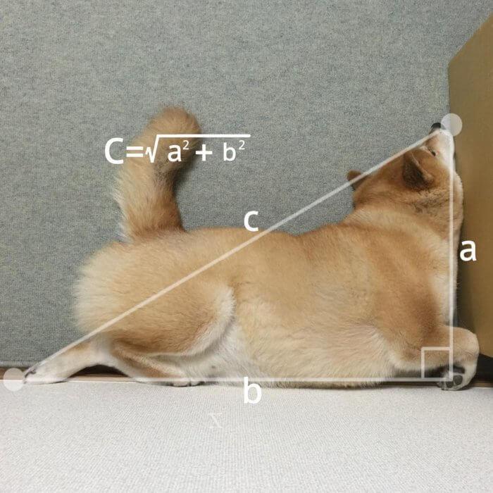 La perfeccion del perro