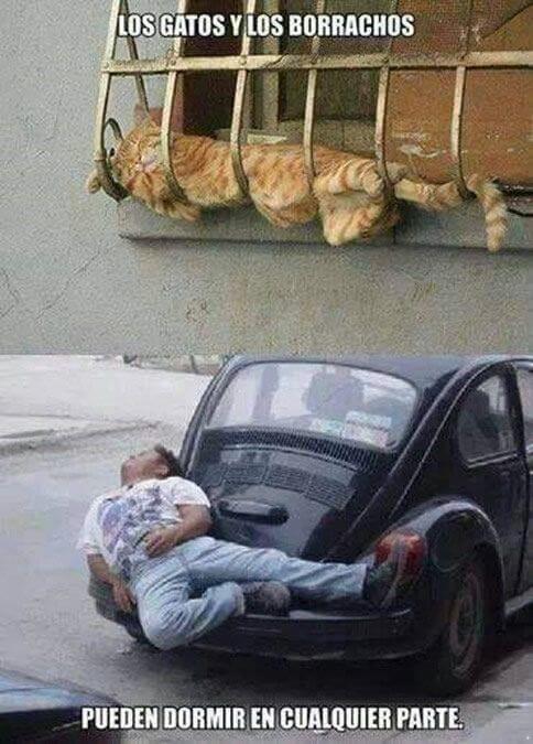 Los gatos y los borrachos