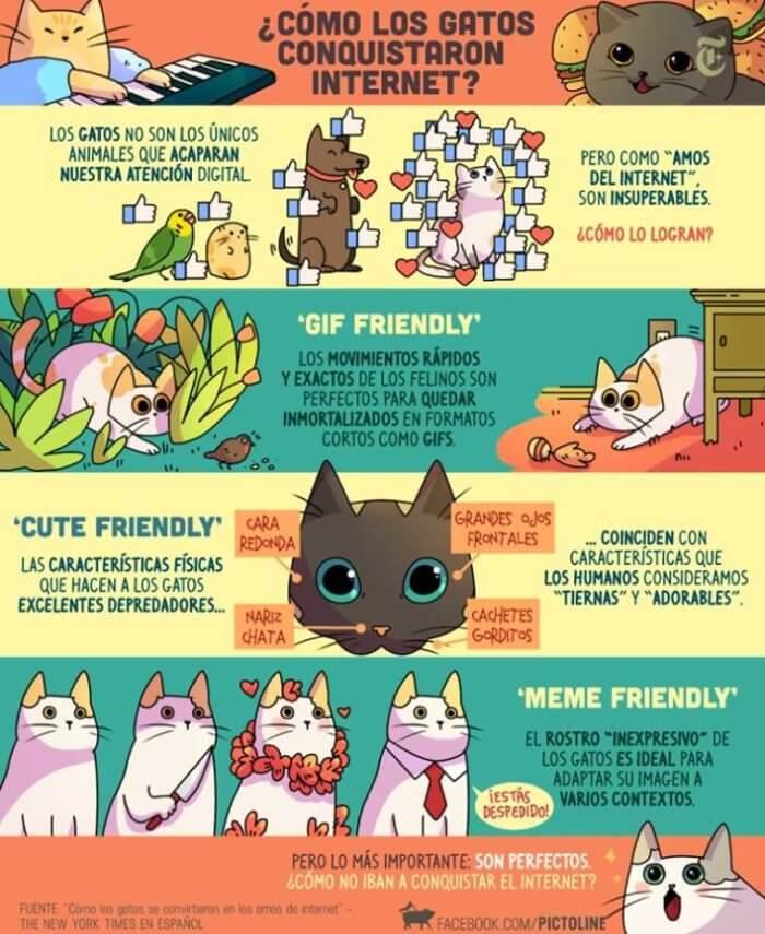 Como los gatos conquistaron internet