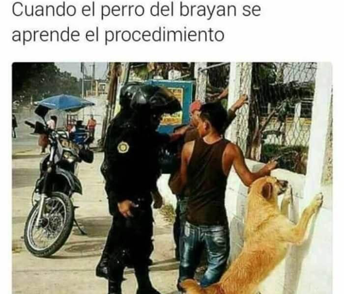 Cuando el perro aprende el procedimiento