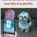 Como tomar una foto a un perrito