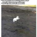 Cuando el gato esta limpio