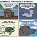 Instintos animales