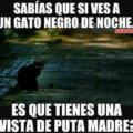 Si vez un gato negro en la noche