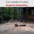 El perro ilusionista
