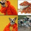 Preferencias de tu perro