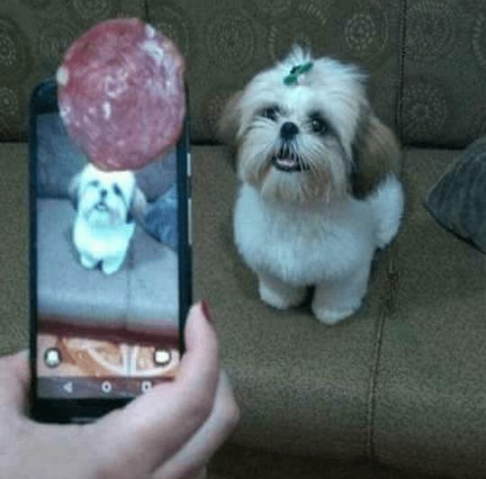 Como fotografear perros