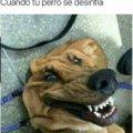 Cuando el perro se desinfla