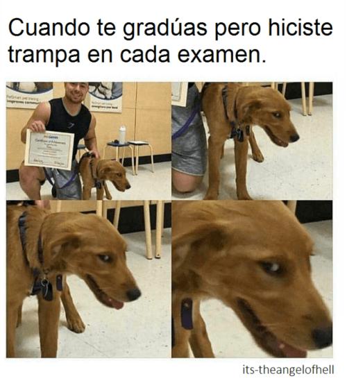 Cuando te graduas con trampa