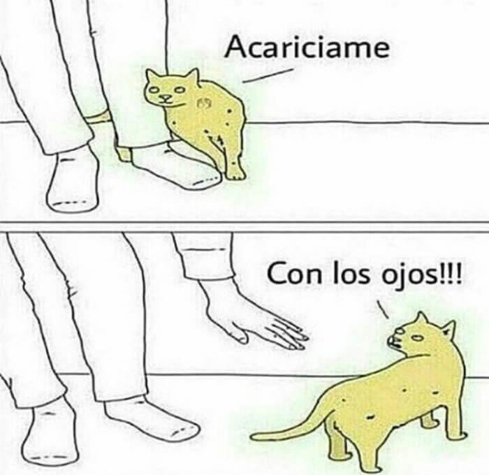 El cariño que quieren los gatos