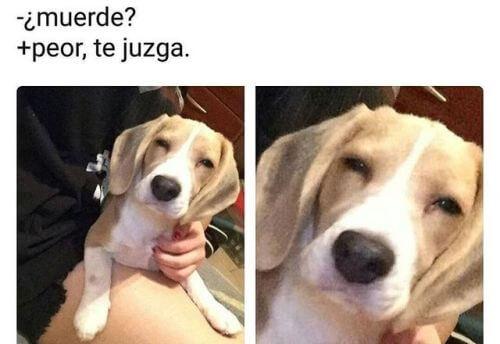 Tu perro muerde