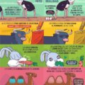 Creencias erroneas de animales