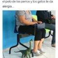 Cuando quieres tener una mascota